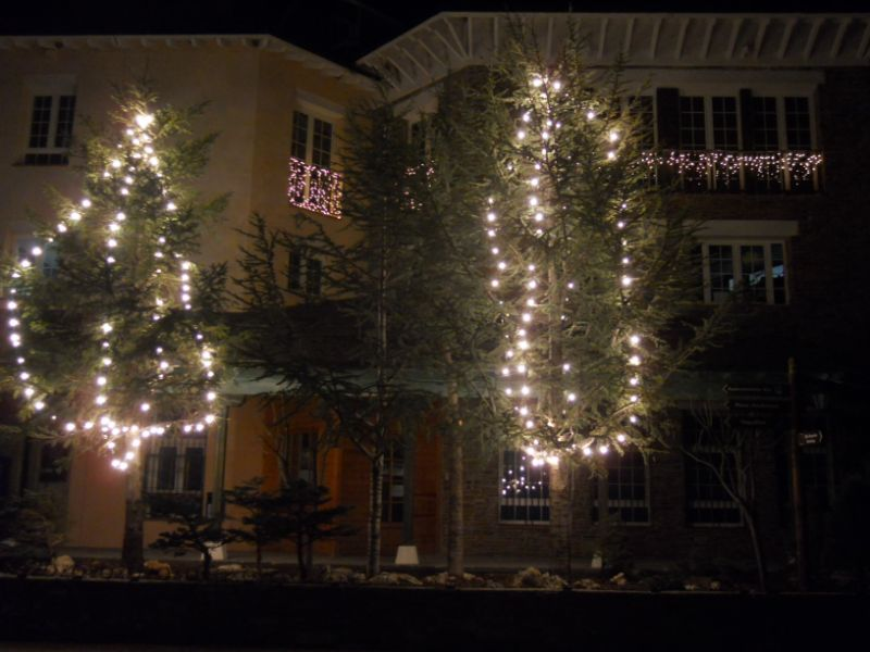 Árboles con luces navideñas