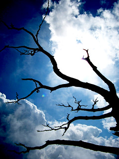 Blue Sky, Tree Branches   by everlutionary