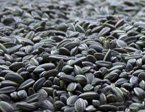 Ai Weiwei / 艾未未 : Sunflower Seeds | by Dominic's pics