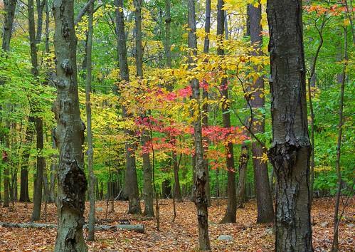 autumn stitch johnjmurphyiii park connecticut hurdstatepark easthampton fall newengland october usa 06424 foliage