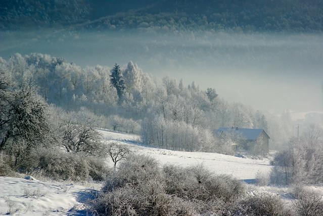339/365: Frozen forest