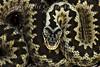 Reptiles & Amphibians thumbnail