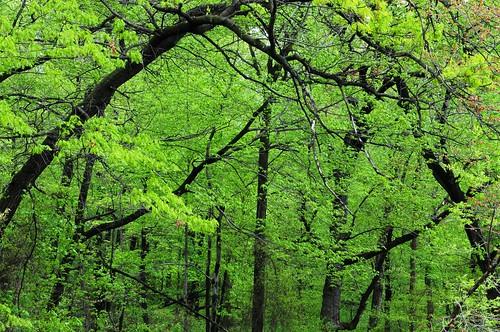 trees green songlyrics odc3
