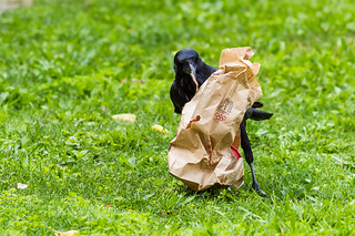 Crow eating take out. | by robwill4