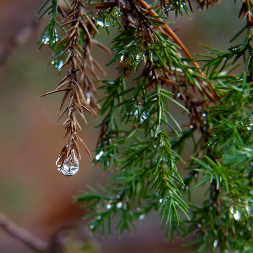 Droplets | by Dendroica cerulea