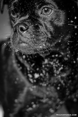 Balou the Dog | by Frozenpanda.com - Daniel Nielsen Photography