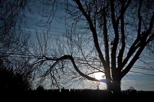 city blue trees light sky sun cold tree oklahoma nature silhouette clouds sunrise lens geotagged lumix branches panasonic 17 pancake 20mm okc ok oklahomacity dmc f17 m43 gf1 mft micro43 microfourthirds dmcgf1 panasonicdmcgf1