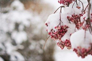 Frozen Berries | by Nanagyei
