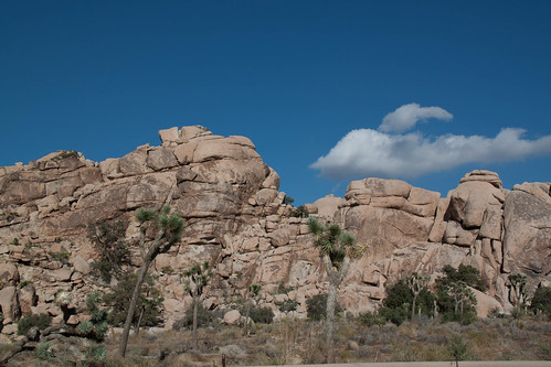 Joshua Tree National Park | by betsyweber