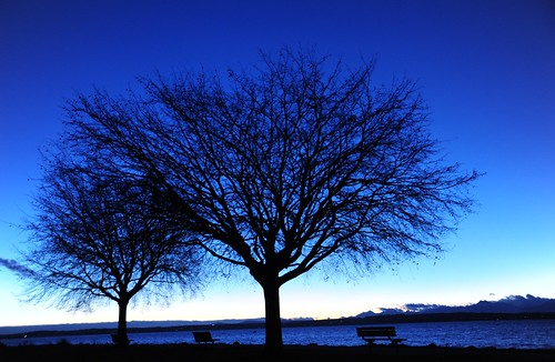 Two trees, three benches for the view, Golden Gardens Park