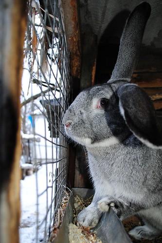 Rabbit | by Abysim