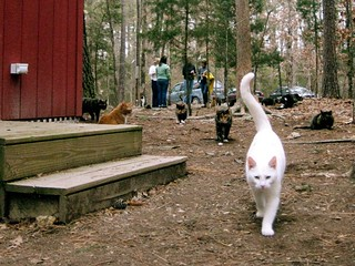 Cats on the grounds | by Goathouse Refuge