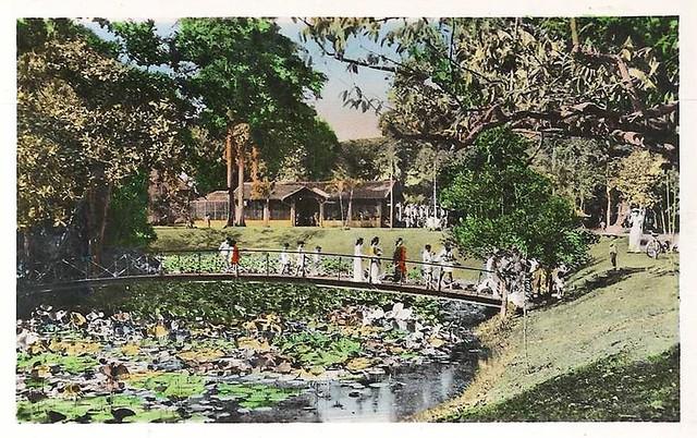 Pont à travers le lac de Nénuphars dans le jardin botanique env 1950