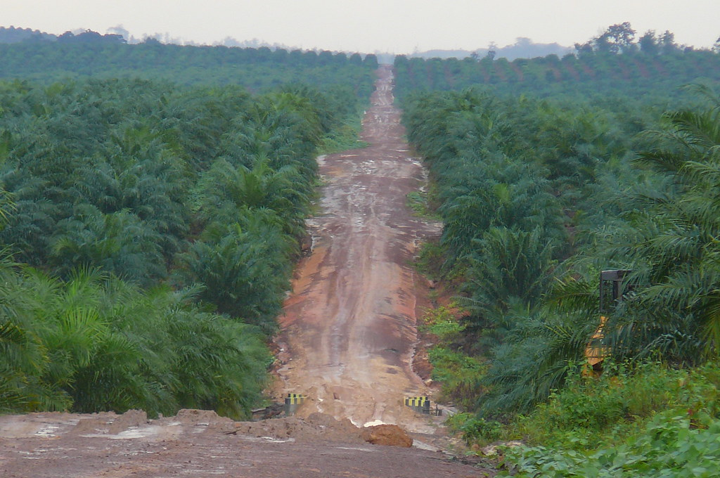 RAN's Rainforest Agribusiness Team Investigates Palm Oil C