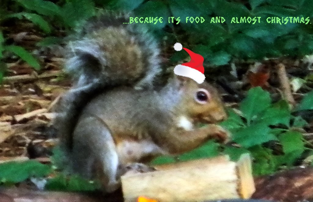 ..because it's food and I am a squirrel.