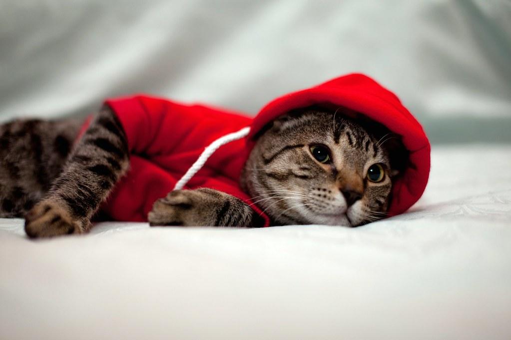 Red Hoodie Cameron 12