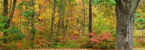 middletown autumn wadsworth stitch johnjmurphyiii park connecticut fall newengland october usa 06457 foliage