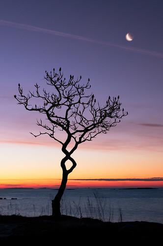 ocean sea moon tree sunrise point dawn nikon fort maine foster moe chen kittery 2470mm28