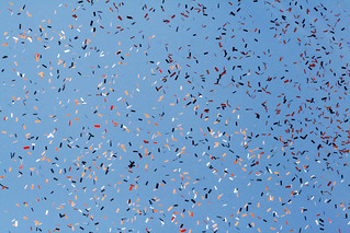 Confetti Against a Blue Sky | by shaire productions