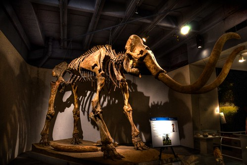 Museum Nature Science Woolly Mammoth | by AmateurArtGuy