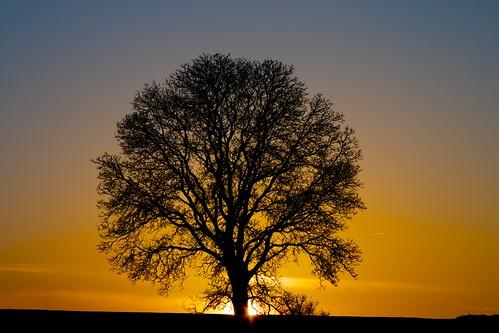 sunset sun tree dawn day alba clear sole albero