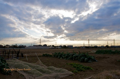 morning japan clouds sunrise fields farms crops kanagawa hiratsuka copyright©jameskemlo copyright©junpeihayakawa