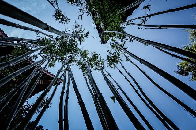 Amongst Bamboo