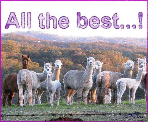 eCard: Miscellanoeus - alpacas: All the best! | by you get the picture