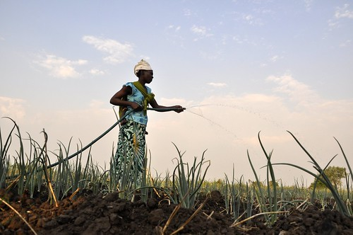 Bringing water to the crops thanks to an irrigation project | by DFID - UK Department for International Development