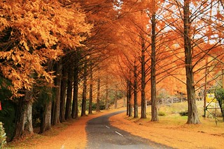 Metasequoia | by Takako off