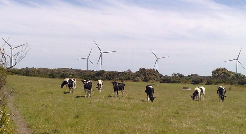 Wind farm near Wonthaggi