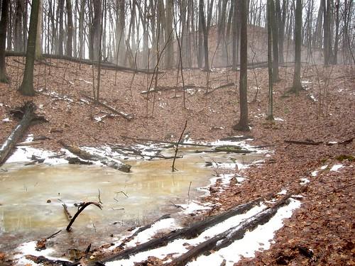 trees snow ice leaves fog mendonponds 55degrees