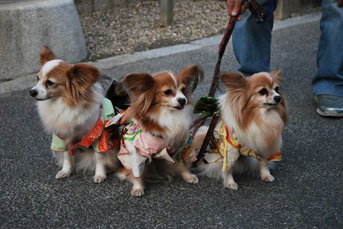 Kimono dogs | by What What