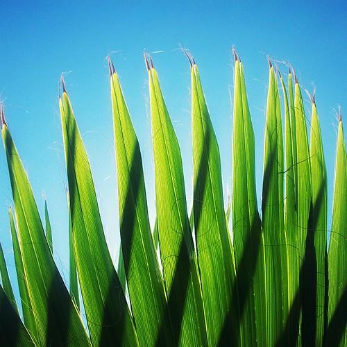 blue flores macro verde green azul texas kodak houston vert palm bleu palma m753 vimfur