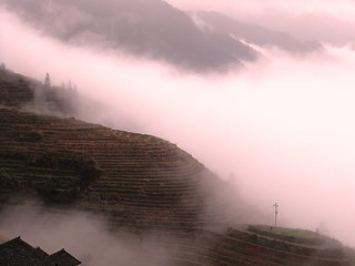 Dragon Terraced Rice Fields | by everlutionary