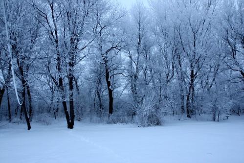 trees frost rapids covered cedar ia