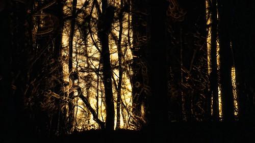 sunset forest woods 500mm topaz delos adjust d300