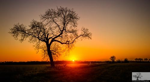 trees sun tree silhouette sunrise bedford bedfordshire naturereserve flare felton goldenhour wildlifetrust greensandridge robertfelton oldwardentunnel oldwardentunnelnaturereserve wildlifetrustforbedfordshirecambridgeshireandnorthamptonshire