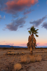 lonely palm tree 2