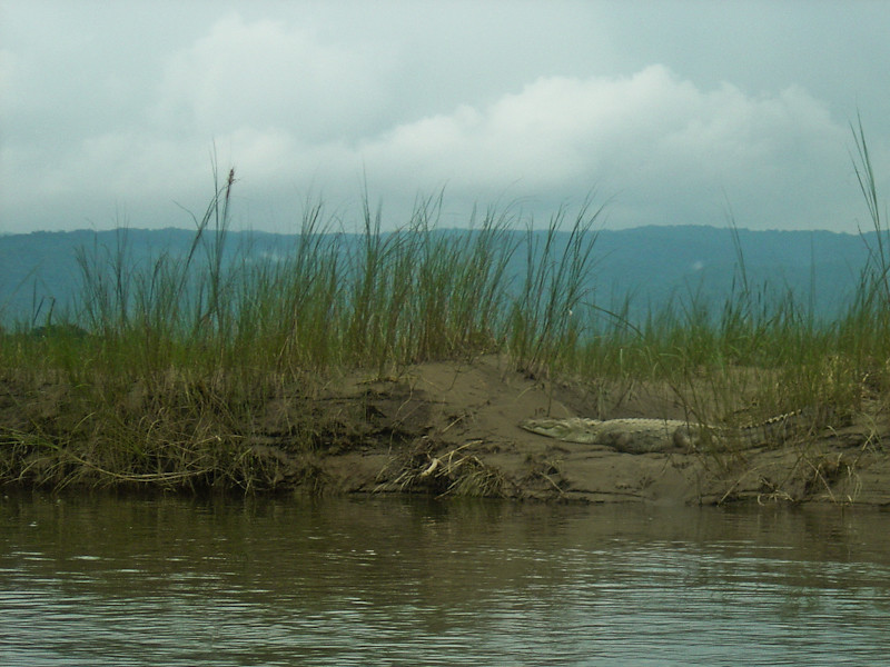 crocodile      DSC00010