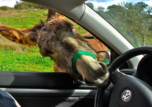 OK, let me drive... | by F H Mira
