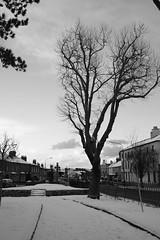 Harolds Cross Park 3