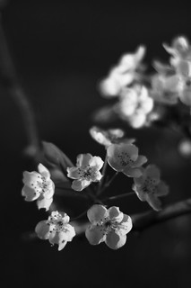 Springtime in Black & White
