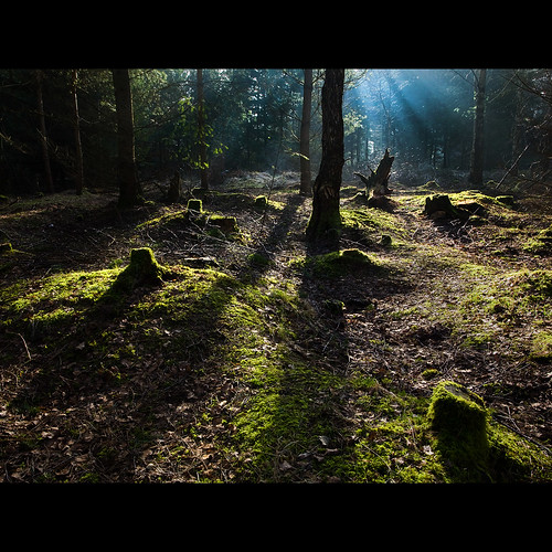 uk trees light shadow england forest sunrise dawn moss cumbria penrith whinfellforest