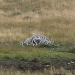 Pile of Elk Antlers