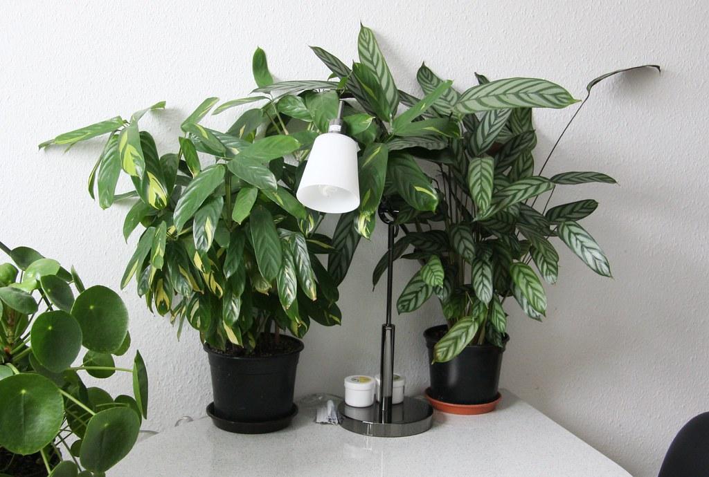 Kräuter Küche Pflanzen