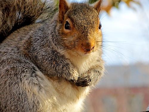 Fat Squirrel, Washington, DC