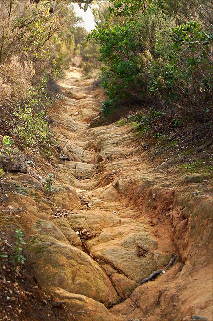 Le chemin creux - Bormes-les-Mimosas (Var)
