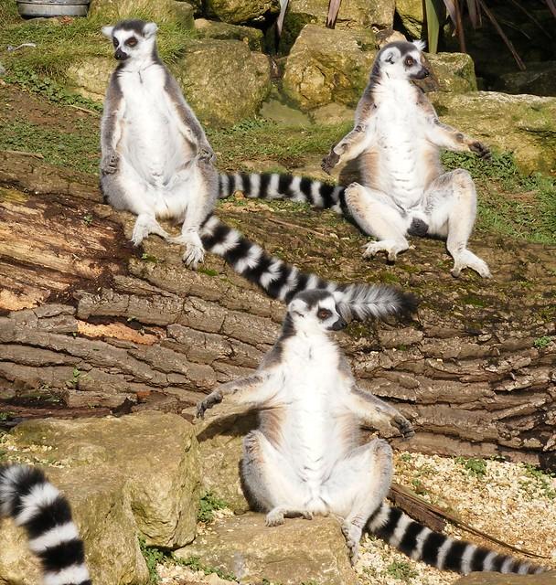 Cotswolds wildlife park 2011(feb)