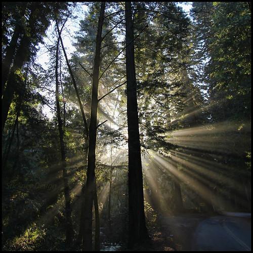 stickneydesign lifelover4 canon t2i 550d canyon california ca usa redwoods sunrays pinehurst efs1022mmf3545usm mist fog circularpolarizer huckleberry sibley sequoiasempervirens oakland ebparksok sanleandrocreek crepusculars hike hiking nature outdoors ebrpd hughstickney